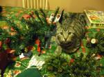 Amazing destructive power of the kitten!