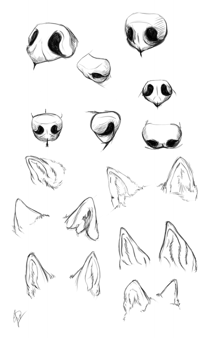 Wolf Nose Ears Study By Esphir