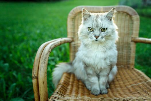 Guschti, my pet by eightcore