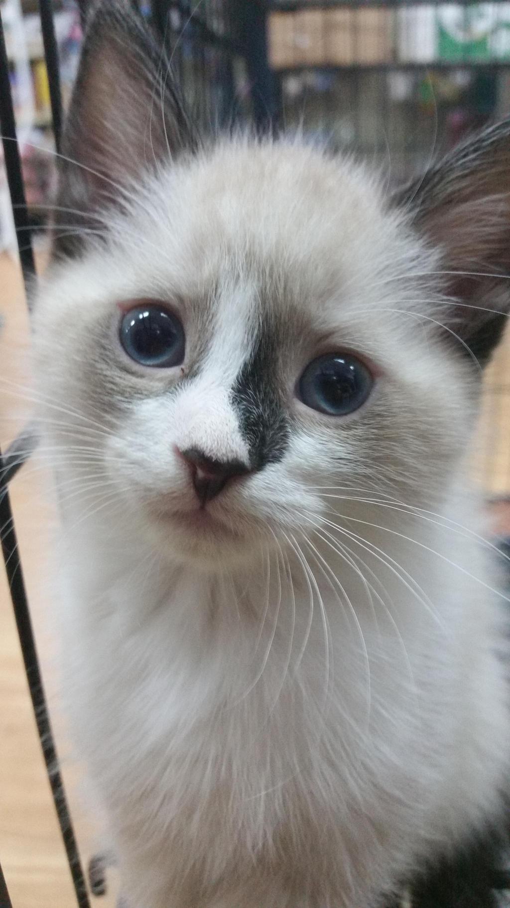 Kitten by AnimeDragon910