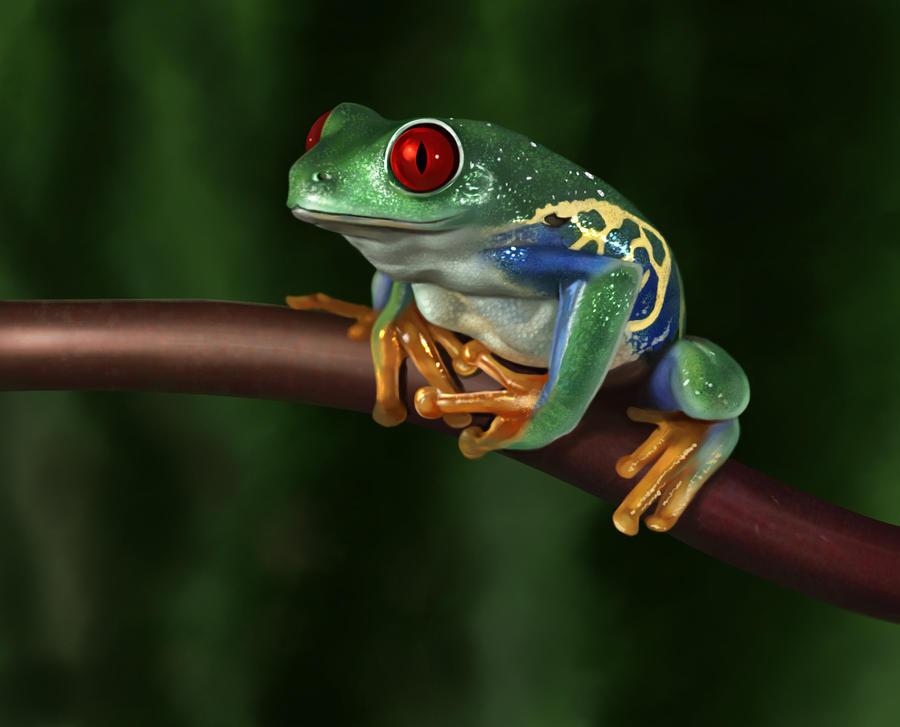 Frog by Shantalla