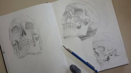 Skulls - Graphite pencil drawing