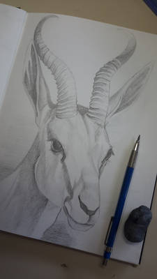 Deer - Graphite Pencil Drawing
