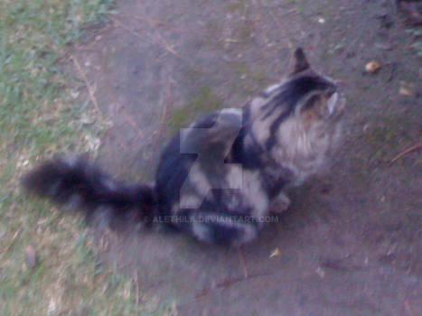 Cat (Back)