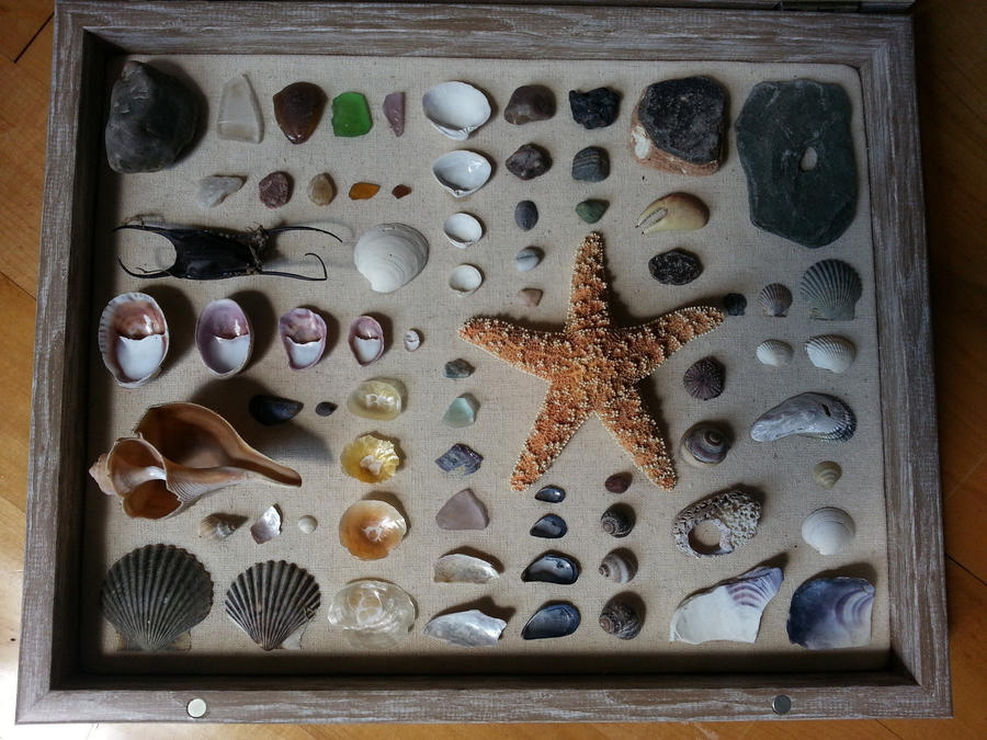 Second shell shadowbox by pathetictastic