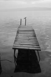 bird and lake