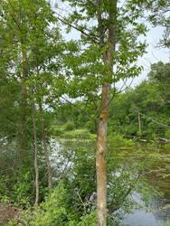 Pine River 2