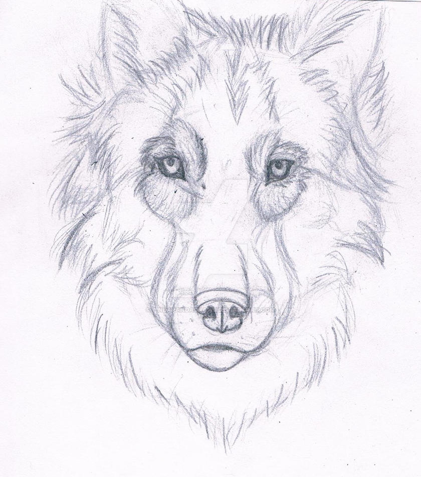 Wolf pencil drawing by pindapandadraws on deviantart
