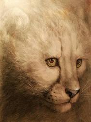 Eyes of wild