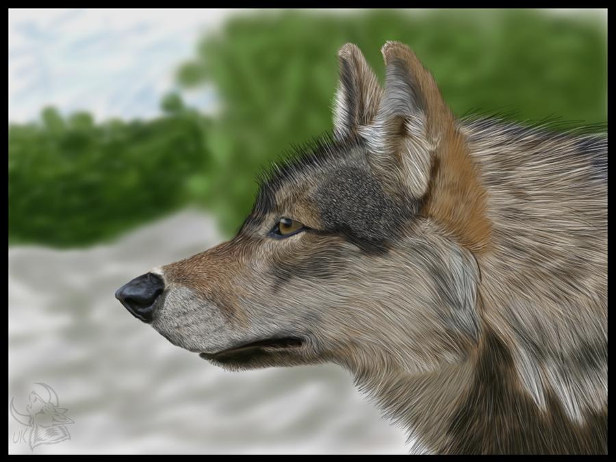 Wolf realism by UKthewhitewolf