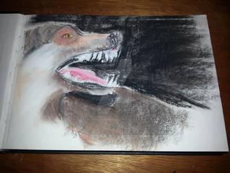 Wolf Snarl in Pastel