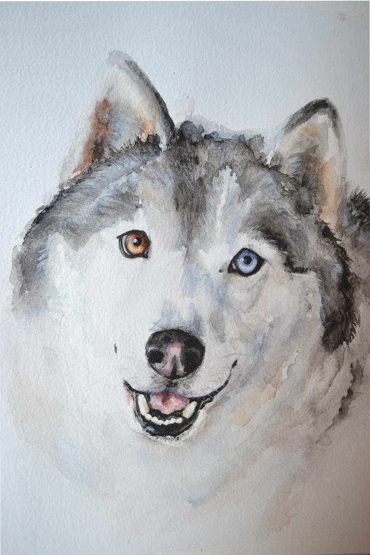 Husky by PaintedHabitat