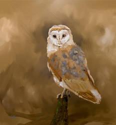 Vr Oil  Owl Painting
