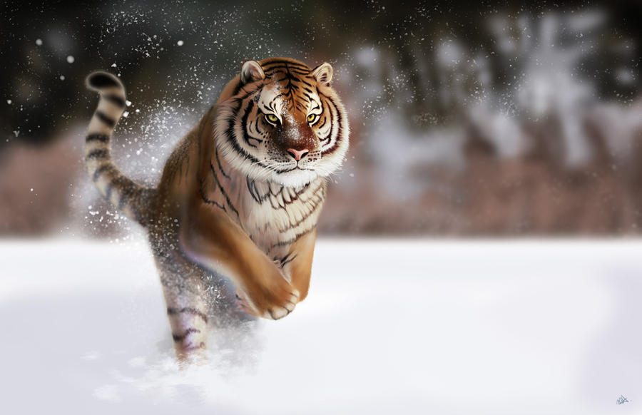 Tiger Running in Snow by wowhappyfish