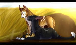 - Warriors: Birth of 'golden' kittens-