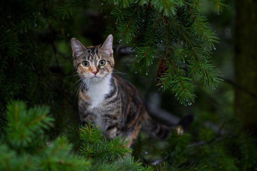 Tree Kitty 3 by arcticjuniper