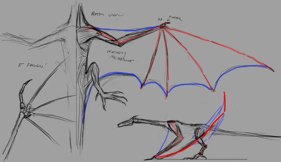 Dragon anatomy sketches by the-least
