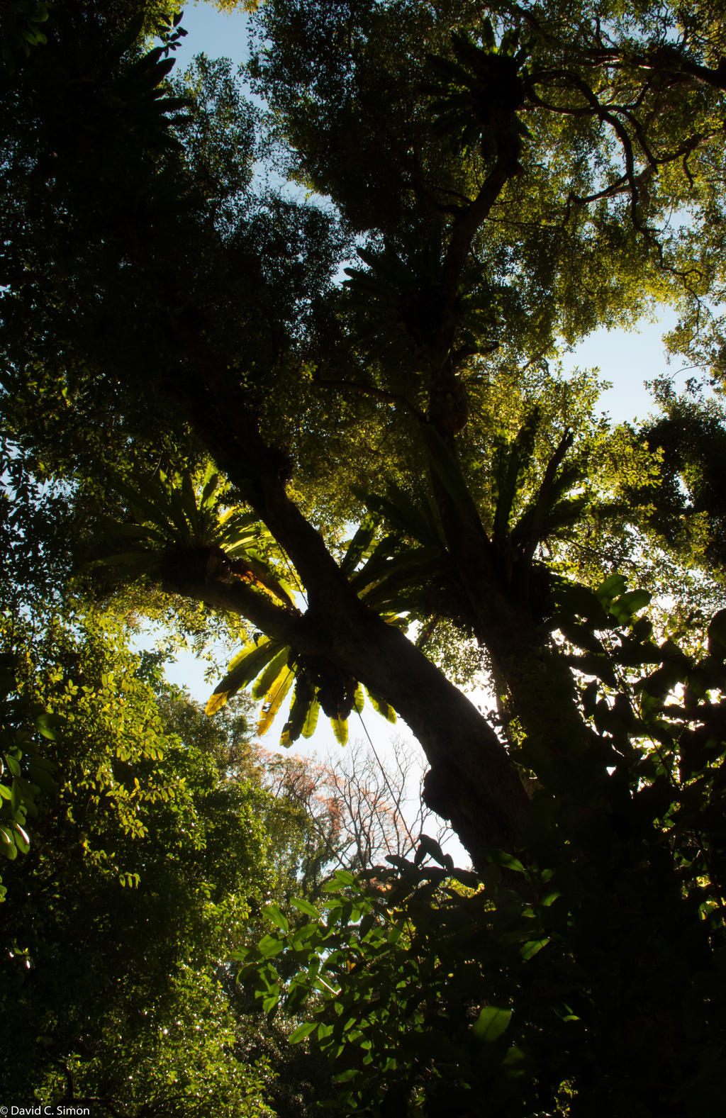 Birds Nest Ferns by the-least