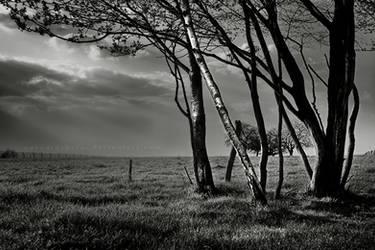 _ under a sky that is grey. by adeadrockstar
