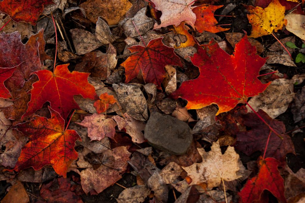 Fall by asaph70