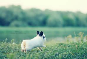 Follow the White Rabbit by knyaka