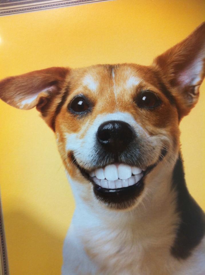 Happy Dog Quotes. QuotesGram - photo#2