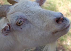 Maid-of-Milk's Profile Picture