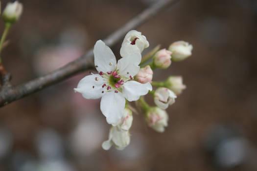 Spring's Beginning