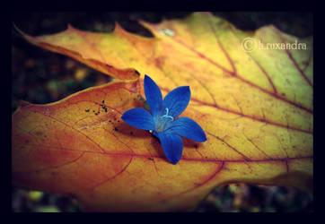 My autumn' by ruxydeva