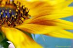 floarea.soarelui by ruxydeva