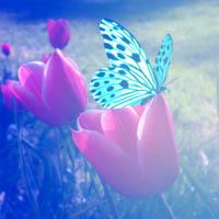 De Mariposa y Flores by maiarcita