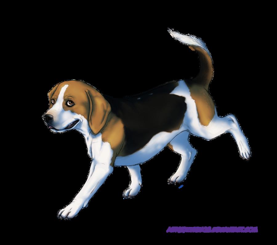 Beagle D By Kimbia28 On DeviantART