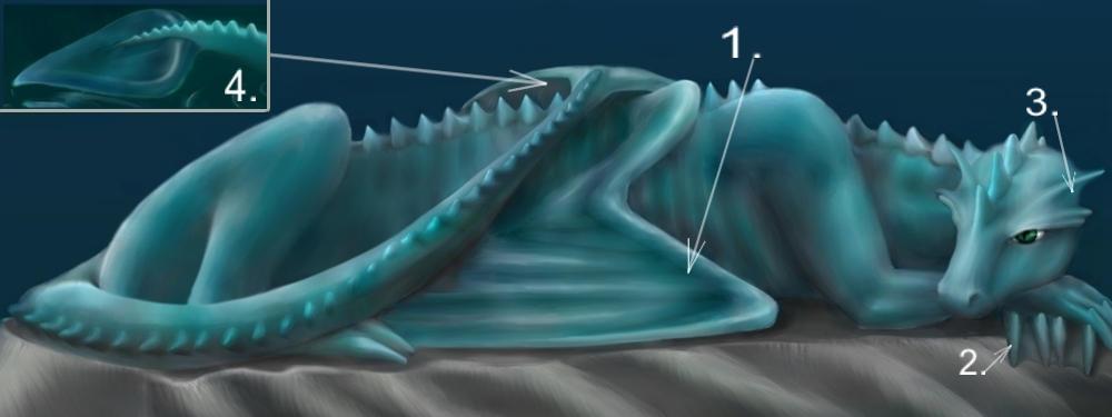 Water dragon anatomy