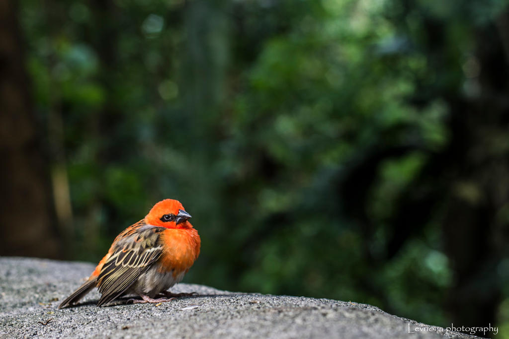 small bird by Levriona