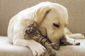 Springbrook Animal Care Center LLC : Vets On Duty by springbrookacc