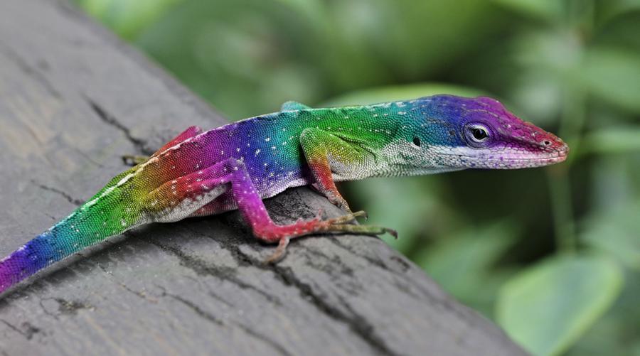 Colorful Reptiles http://9grey1.deviantart.com/art ...