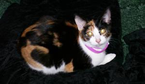 Roxanne - Cat