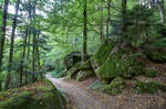 Walk in the woods 1