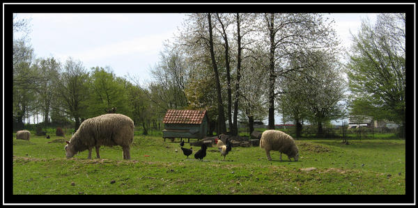 French Farm yard animals by blissflowers