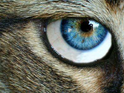 A Cat's Intelligence and Soul by StareGlareSilence