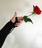 Hand + Rose 1 by Imm0rtal-St0ck