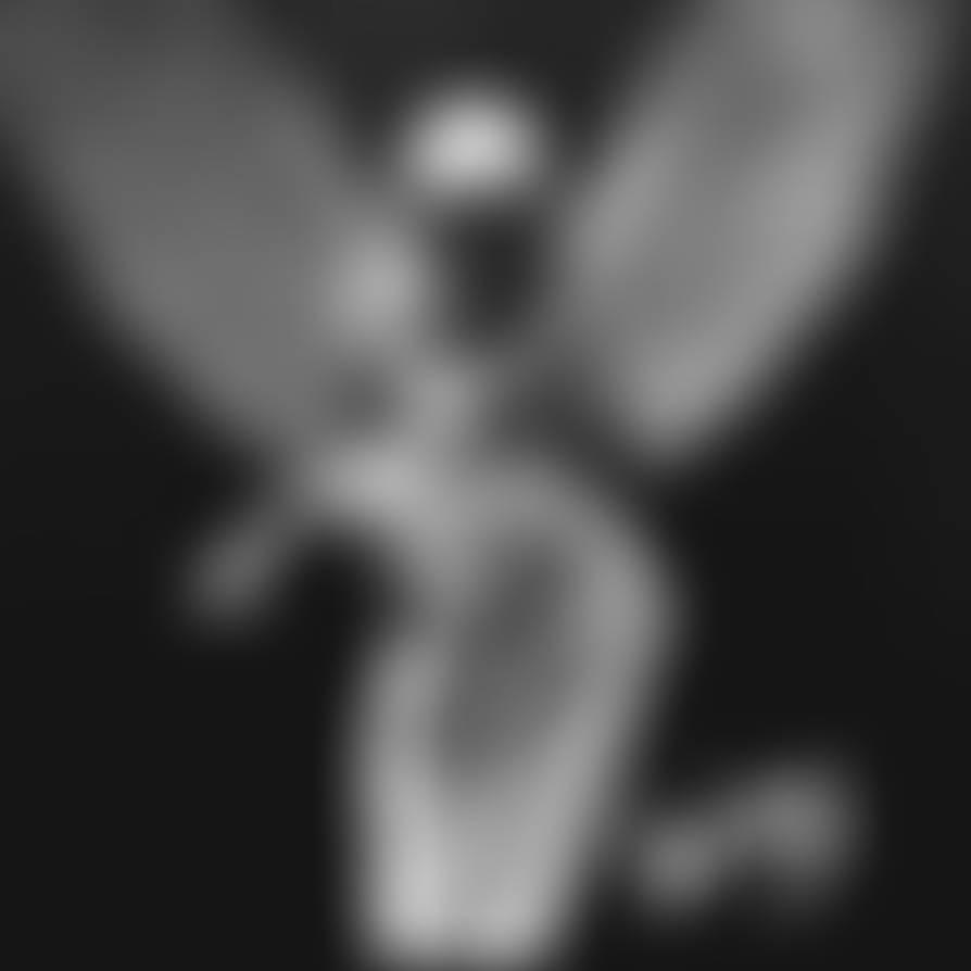 Angel : Light Study