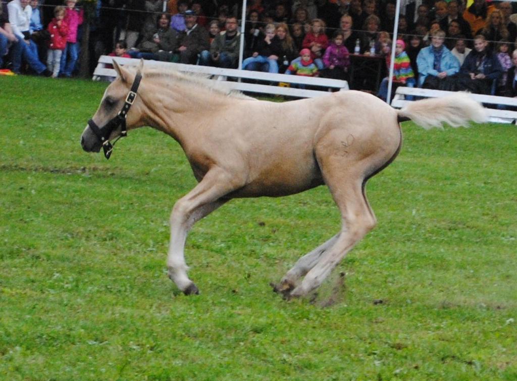 palomino foal - photo #30