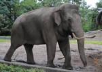 Elephant Stock 09