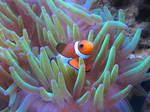 Here is Nemo