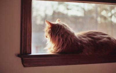 Window Tiger
