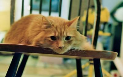 Chair Tiger