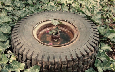 Tire and Vines
