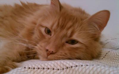 Bed Tiger