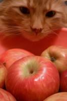 Apple Tiger